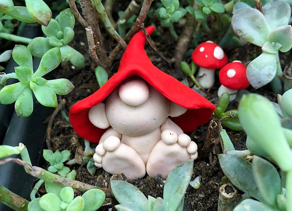 Garden Gnome 15th May