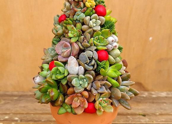 Succulent Christmas Tree Workshop 21st Nov