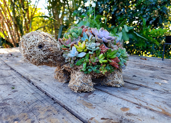 Succulent Turtle workshop 15th May