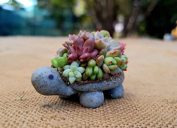 Kids Mini Succulent Turtle 29th June 8+