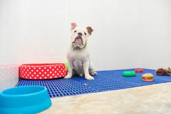 DogSpace65.jpg
