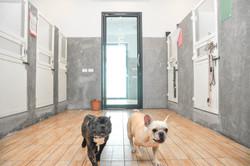 DogSpace76.jpg