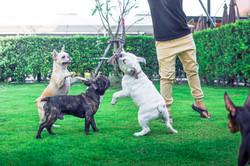 DogSpace10.jpg