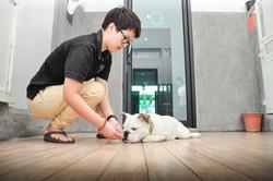 DogSpace69.jpg