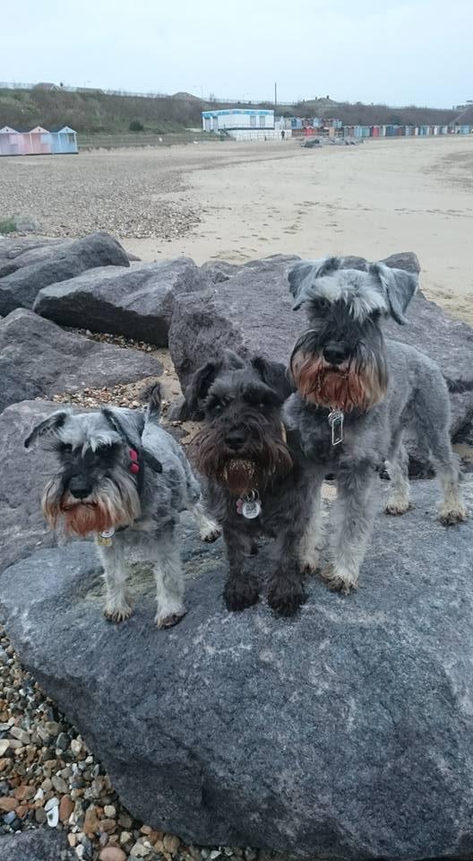 JD, Max & Kiki