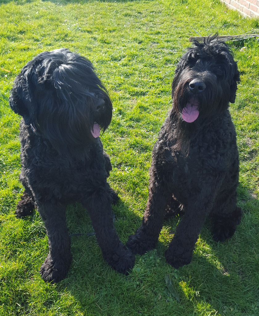 Tula & Rocco