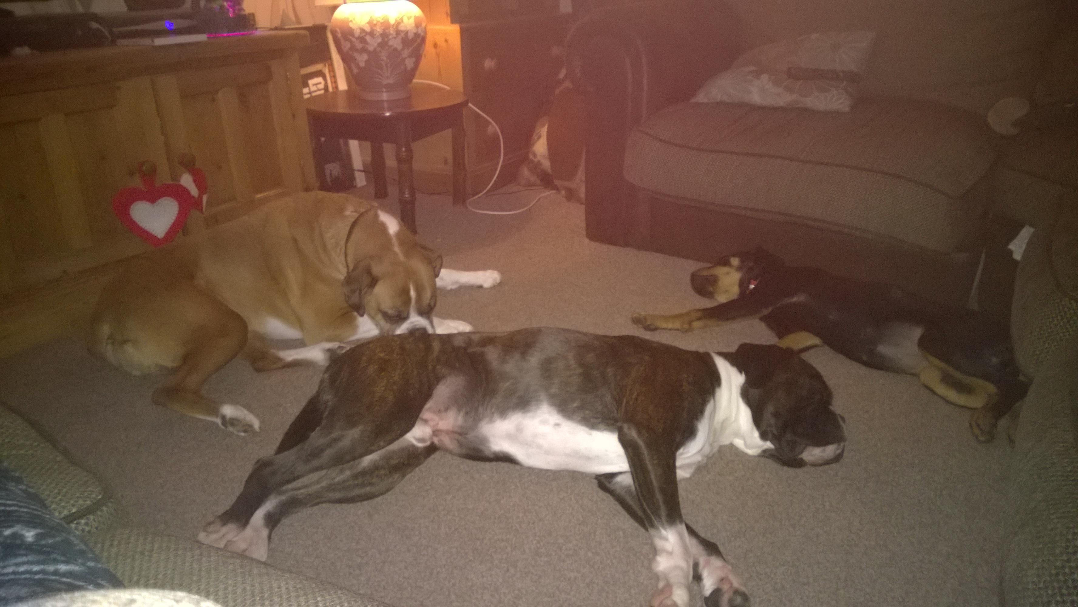 George, Lenny & Tess