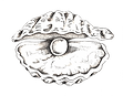 TEST oyster-tail-illustration copy.png