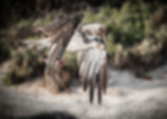 OspreyHunt.jpg