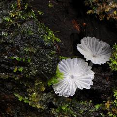 02 Mushrooms.jpg