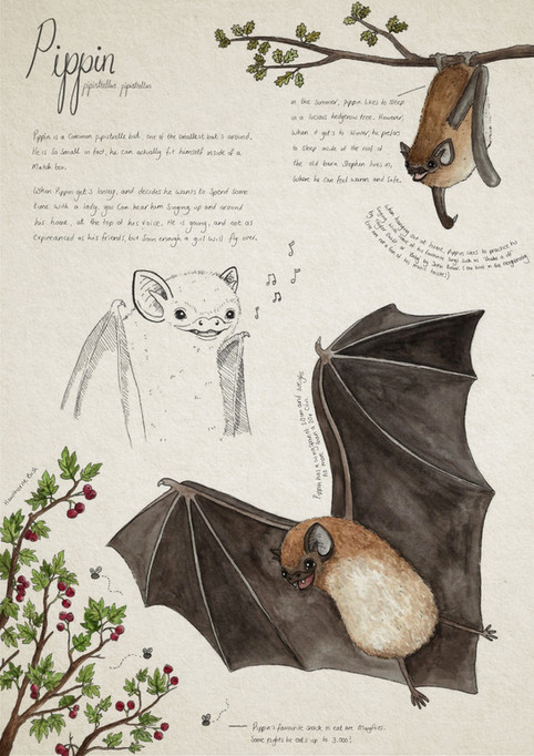 British Bats