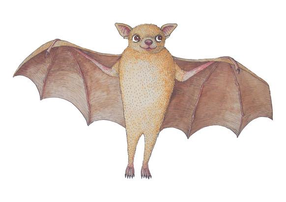 Peters Dwarf Epauletted Fruit Bat.jpg