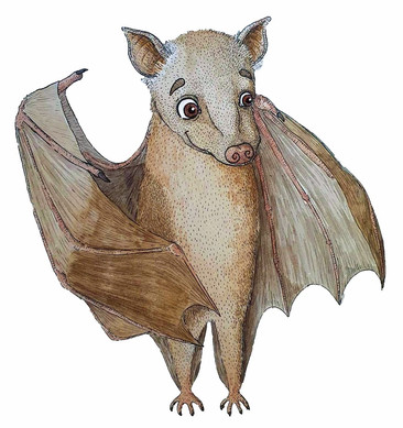 Angolan Epauletted Fruit Bat.jpg