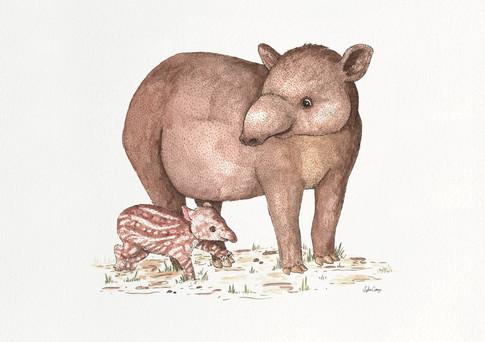tapier.jpg