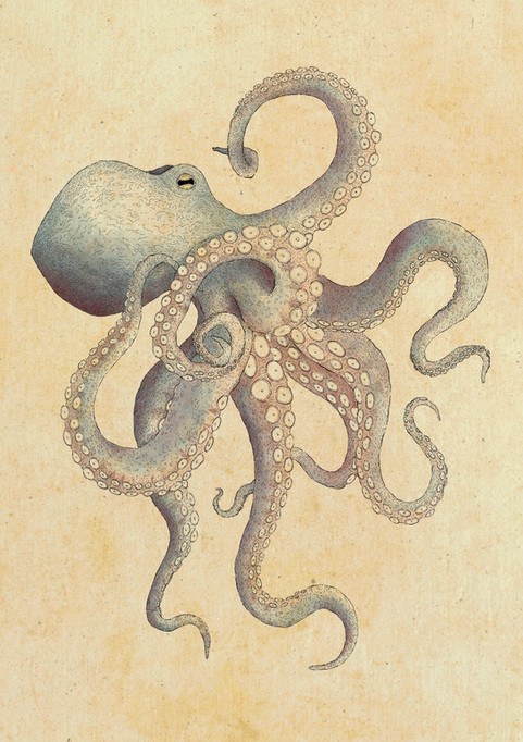 Octopus Illustrations