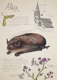 Alice Print.jpg