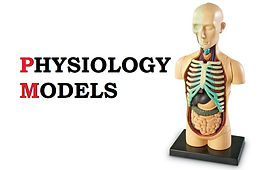 human-physiology-models-500x500.jpg