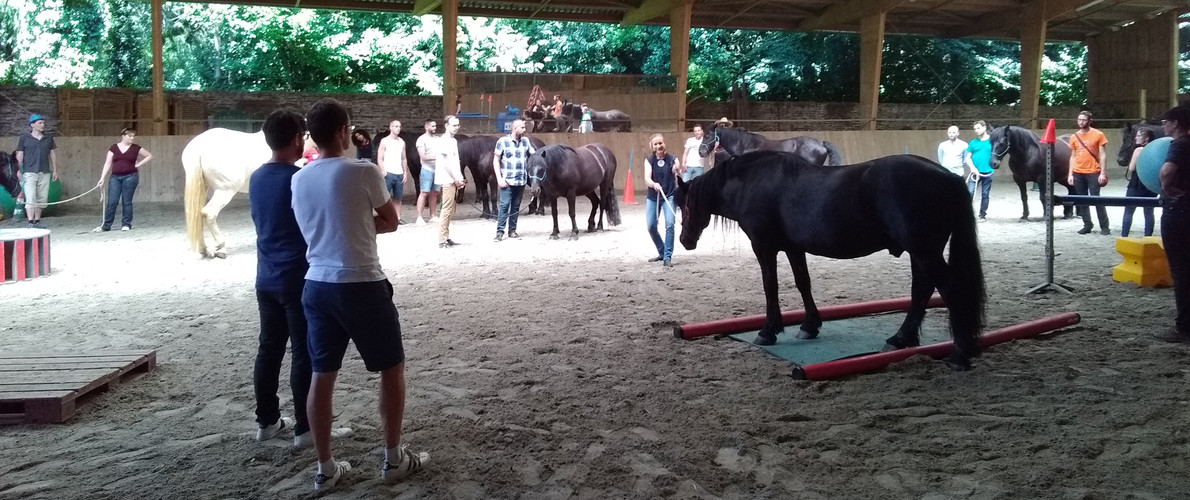 Atelier découverte de l'équitation éthologique