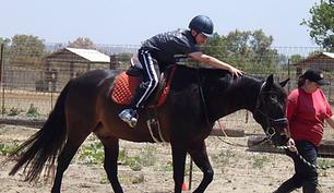 San Diego Therapeutic Horsemanship Henry