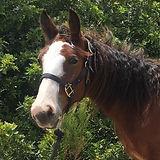 San Diego Therapeutic Horsemanship Paddi