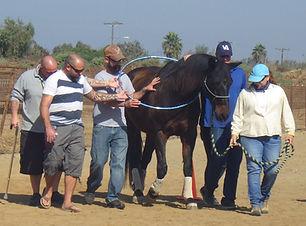 San Diego Therapeutic Horsemanship works
