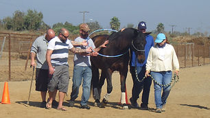 San Diego Therapeutic Horsemanship works