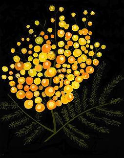 mimosapartylogo.jpg