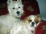 Dougie Now Cooper And Chelsea.jpg