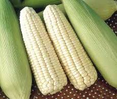 Hokkaido Milk Corn 白玉米