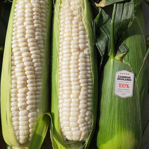 Hokkaido Milk Corn 北海道牛奶玉米 x 12 pcs