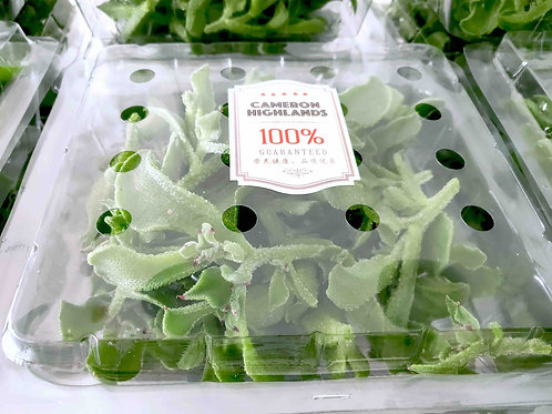 IcePlant 冰菜 x 10 trays