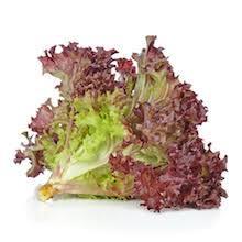 Red Coral Lettuce 红生菜