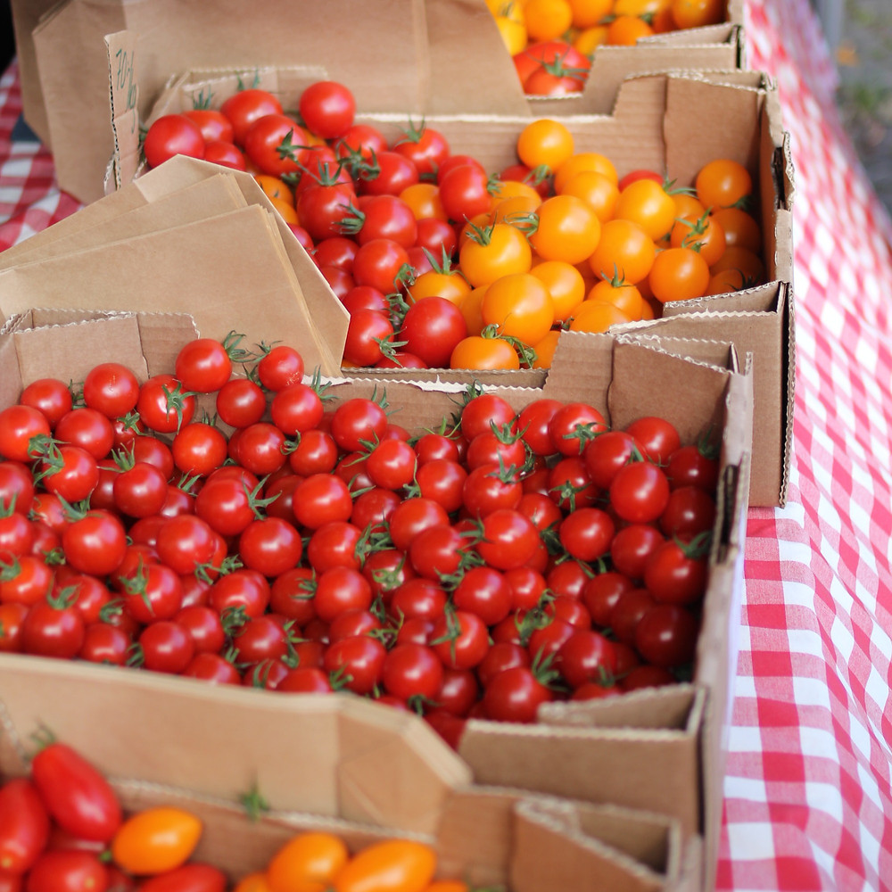 Red and yellow cherry tomato supplier- Chocobo Trading