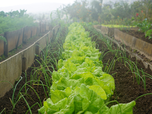 Guide to Select the Best Wholesale Vegetable Supplier