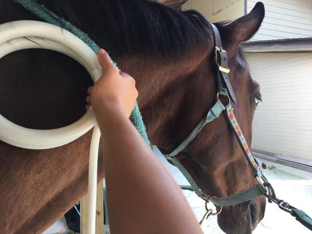 Kai Magna Waved at Cornerstone Equestrian
