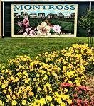 Montross flowers.jpg