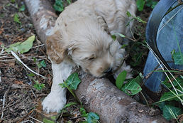 how to care for labradoodle puppy