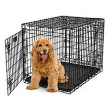 how to care for labradoodle,  labradoodle care, labradoodle training, labradoodle hygeine, labradoodle needs, labradoodle