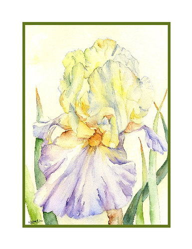 Iris Inflorescence Watercolor Cards