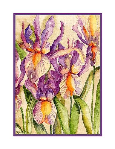 Watercolor Dutch Iris Note Cards