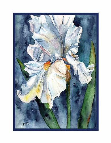 Watercolor White Iris Note Cards