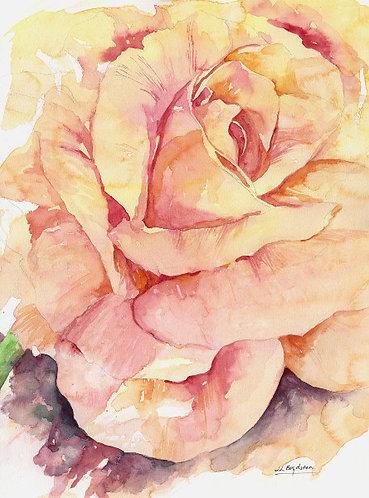 Magnificent Rose Watercolor Original Painting