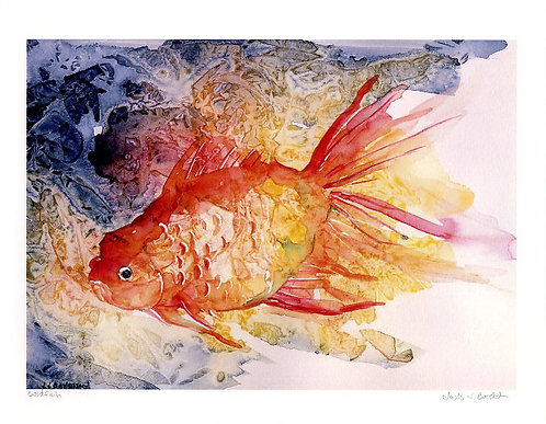 Goldfish Watercolor Giclee