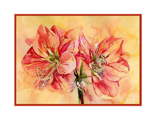 Amaryllis Watercolor Note Cards
