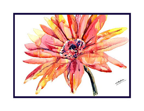 African Daisy Watercolor Note Cards