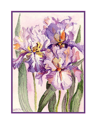 Three Irises Watercolor Note Cards