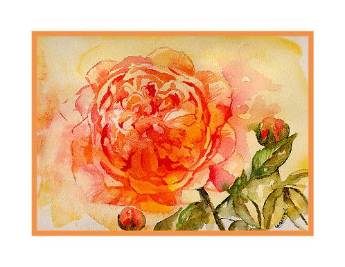 Watercolor English Rose Note Cards