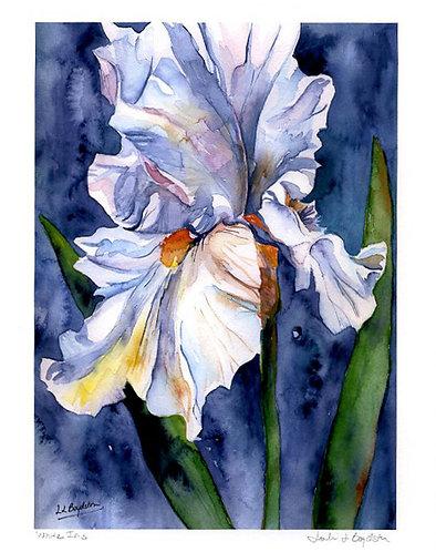 White Iris Watercolor Giclee