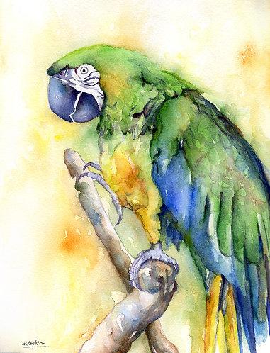 Macaw Parrot Watercolor Original Painting