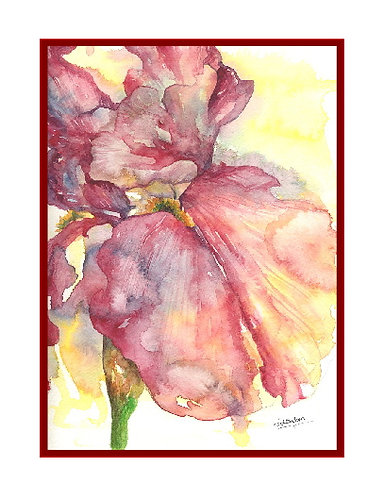 Red Iris Watercolor Note Cards